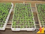 Cultivos orgânicos: produção