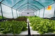 Benefícios do uso da água no cultivo hidropônico