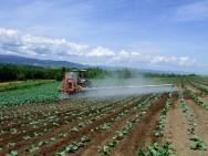 Aprenda Fácil Editora: Fertilizantes iniciam o ano com aumento no setor
