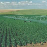 Manejo correto da irrigação aumenta produtividade