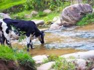 Aprenda Fácil Editora: Qual a qualidade da água que seus animais estão ingerindo?
