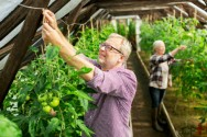 Hortaliças orgânicas em estufa: finalidade da estufa