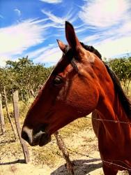 Pesquisadores isolam proteína reguladora do metabolismo de ferro em cavalos