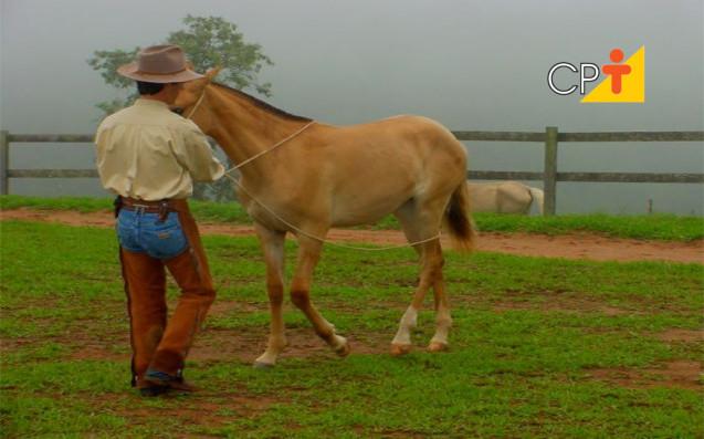 Doma natural comportamento dos cavalos