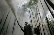 Aprenda Fácil Editora: Pesticida Natural poderá ser uma alternativa Sustentável