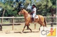 Como comprar cavalos: quarto de milha