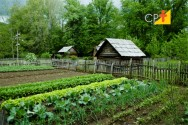 Faça sua horta caseira e ganhe qualidade de vida