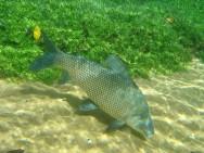 Aprenda Fácil Editora: Duas cidades do Nordeste poderão se tornar criadoras de peixes