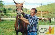 Como avaliar idade dos cavalos: nascimento dos dentes