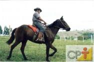 Doma natural: domesticação do cavalo