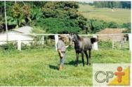 O cavalo age como qualquer animal de estimação. Ele sente prazer em agradar o seu líder (dono)