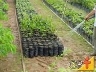 Como montar uma empresa de manutenção de jardins: como regar as plantas