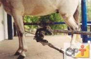 Correção de aprumos e ferrageamento de cavalos: o que é o ferrageamento
