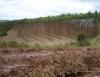 Reposição florestal como forma de preservação dos recursos naturais