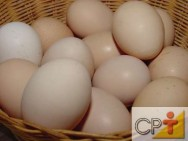 Galinhas poedeiras: a cor dos ovos