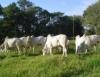Produção de carne e leite pode ser triplicada com a recuperação de pastagens