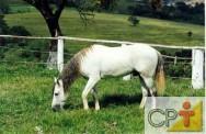 Alimentação de cavalos: diferenças na alimentação