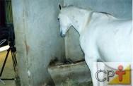 Alimentação de cavalos: cólicas