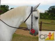 Alimentação de cavalos: curiosidades sobre  alimentação dos cavalos