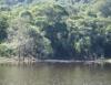 Restauração de florestas é lei e preserva o meio ambiente