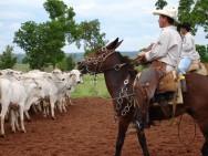 Projeto reconhece a qualificação profissional do vaqueiro
