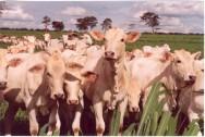 Valor da produção do agronegócio deve crescer 5,3%