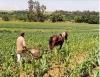Mecanização Agrícola agrega racionalização dos custos e obtenção de alta produtividade