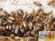 Abelhas nativas sem ferrão: cuidados na criação de abelhas