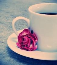 Treinamento de barista: o café mais caro do mundo