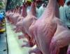 Frango de corte possui grande aceitação no mercado e é destaque na economia brasileira