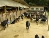 Instalação para ovinos adequada pode posicionar o Brasil como líder mundial da ovinocultura