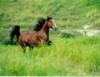 Nutrição é fundamental para melhora da pelagem de cavalos atletas