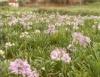 Setor de flores e plantas ornamentais terá crescimento em 2010
