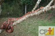 Criação de serpentes para produção de veneno: a importância das serpentes