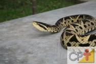 Criação de serpentes para produção de veneno: o criadouro