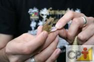 Criação de serpentes para produção de veneno: extração do veneno