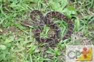 Criação de serpentes para produção de veneno: cobra, naja ou serpente?