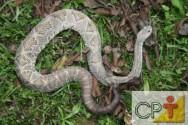 Criação de serpentes para produção de veneno: temperatura