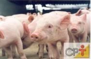 Sistema orgânico de criação de suínos: a carne suína em diferentes culturas
