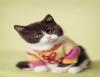 Pet shop, dedicação e cuidado proporcionando bem-estar para você e seu bichinho