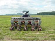 Sistemas de plantio de milho em pequenas propriedades
