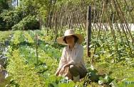 Acordo com a FAO prevê investimentos de R$ 3 milhões na agricultura familiar