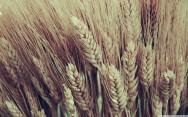Projeto de lei pretende obrigar a análise de toxinas em alimentos importados