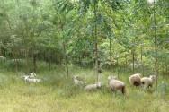 Aprenda Fácil Editora: Reflorestar é sinônimo de lucro para o produtor rural