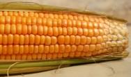Armazenamento do milho em pequenas propriedades