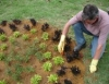 Jardinagem é usada como tratamento contra dores crônicas