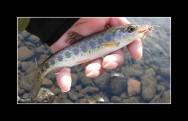 O sucesso de uma criação de peixes está na qualidade do produto oferecido