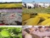 O impacto econômico do aquecimento global na agropecuária brasileira