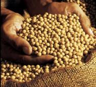 Preço da soja em Paranaguá subiu 45,8% no ano