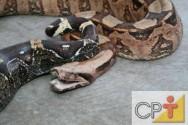 Criação de serpentes para produção de veneno: herpetologia